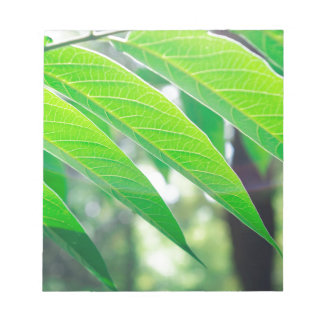 Branch ailanthus with narrow leaves notepad