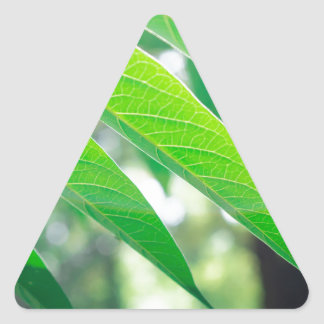 Branch ailanthus with narrow leaves triangle sticker