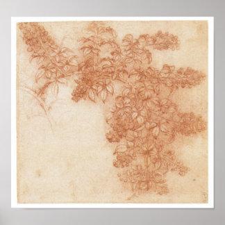 Branch of a Blackberry, Leonardo Da Vinci Poster
