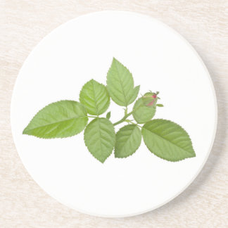 Branch of green leaves coasters