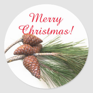 Branch of pine with the pinecones classic round sticker