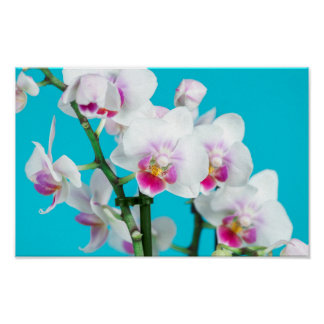 Branch of White Orchid on aqua Spring Photography Poster