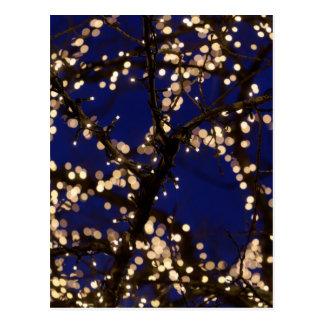 Branches avec des lumières de Noël Carte Postale
