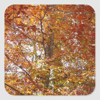 Branches of Orange Leaves Autumn Nature Square Sticker