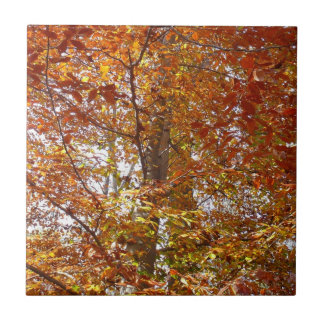 Branches of Orange Leaves Autumn Nature Tile