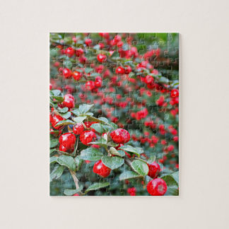 Branches with ripe red cotoneaster berries jigsaw puzzle