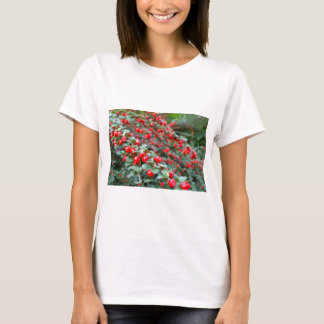Branches with ripe red cotoneaster berries T-Shirt