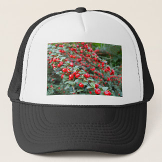 Branches with ripe red cotoneaster berries trucker hat