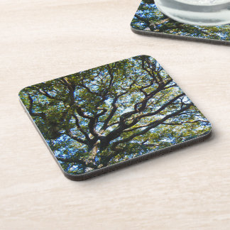 Branching Out Coasters