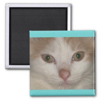 Brandis- beige n white kitty square magnet