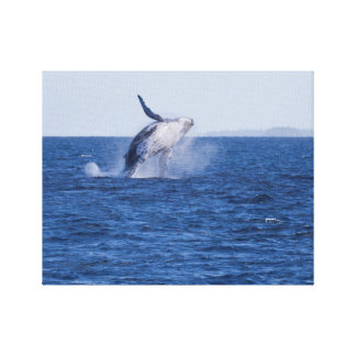 Breaching Humpback Canvas