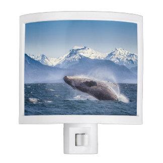 Breaching Humpback Whale In Alaska Nite Light