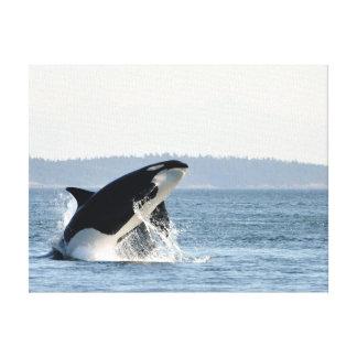 Breaching Orca Canvas Print