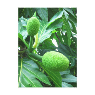 Breadfruit Canvas Print