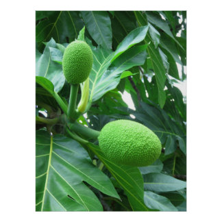 Breadfruit Poster