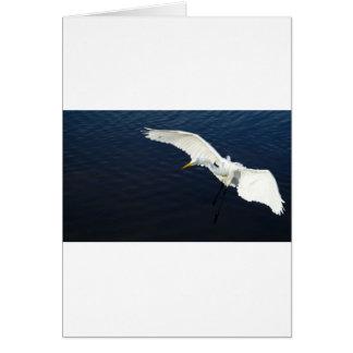 Break egret landing.jpg card