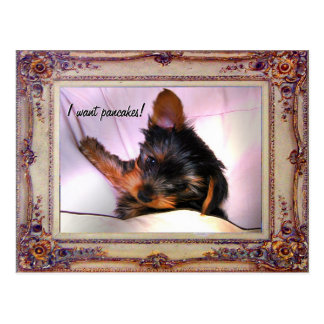 Breakfast in bed Yorkie? Postcard