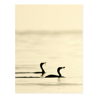 Breakfast Time for Two Cormorants Postcard