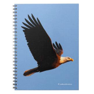 Breathtaking Bald Eagle in Winter Sunset Flight Notebook