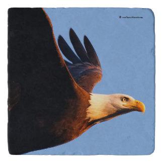 Breathtaking Bald Eagle in Winter Sunset Flight Trivet