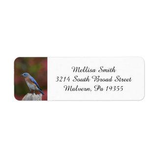 Breathtaking Eastern Bluebird Return Address Label