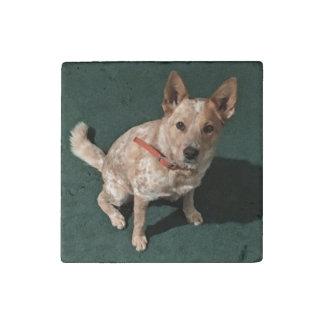 Breeze Doggie Stone Magnets