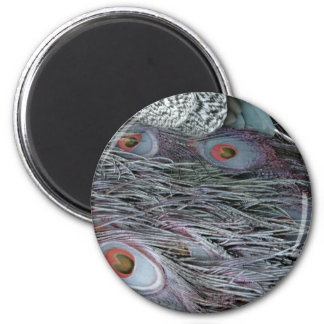 breezy peacock feathers 2 inch round magnet