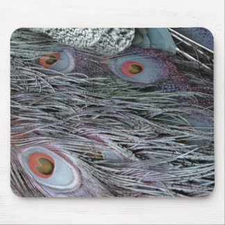breezy peacock feathers mouse pad