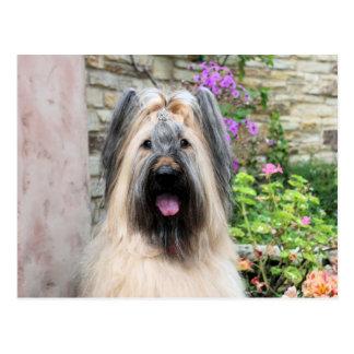"Briard Dog in a Tiara ""Queen Bee"" Postcard"