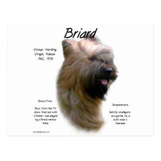 Briard (tawny) History Design Postcard