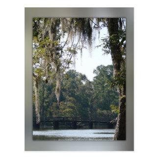 Bridge in the Swamps Postcard