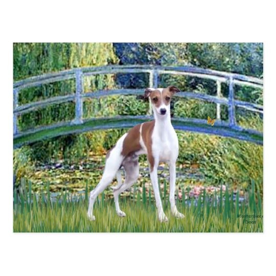 Bridge - Italian Greyhound 7 Postcard
