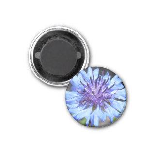 Bright Blue Bachelor's Button Flower Magnet
