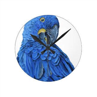 Bright blue Hyacinth Macaw Wall Clocks