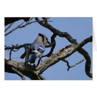 Bright Blue Jay Card