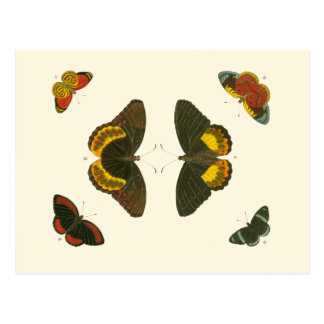 Bright Butterflies by Pieter Cramer Postcard
