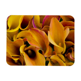 Bright colorful calla lilies at the rectangular photo magnet