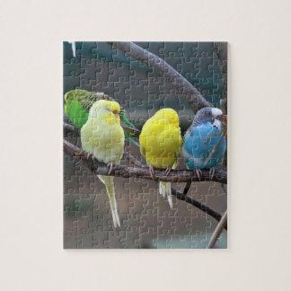 Bright Colorful Parakeets Budgies Parrots Birds Jigsaw Puzzle