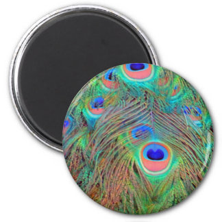 Bright Colorful Peacock Feathers 2 Inch Round Magnet