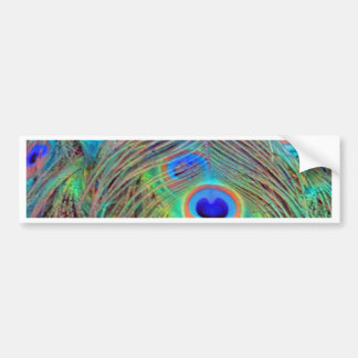 Bright Colorful Peacock Feathers Bumper Sticker