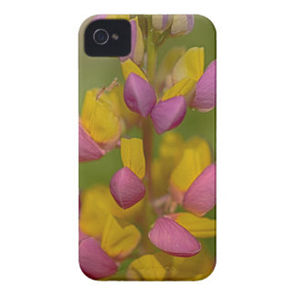 Bright colors iPhone 4 cases
