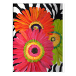 Bright & Colourful Gerbera Daisies Post Cards