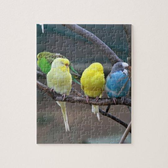 Bright Colourful Parakeets Budgies Parrots Birds Jigsaw Puzzle