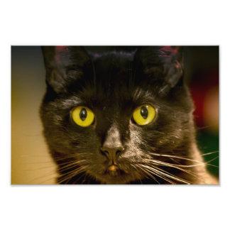 Bright eyes black cat photo print