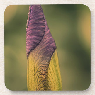 bright flower bud coaster