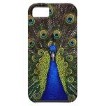 Bright girly pretty peacock bird nature animal iPhone 5 case