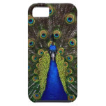Bright girly pretty peacock bird nature animal iPhone 5 case