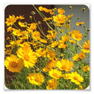 Bright happy yellow flowers in a bunch photo print