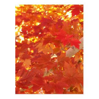 Bright Maple Leaves Postcard