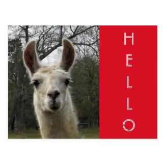 """Bright N Cute """"Hello"""" Llama Postcard"""